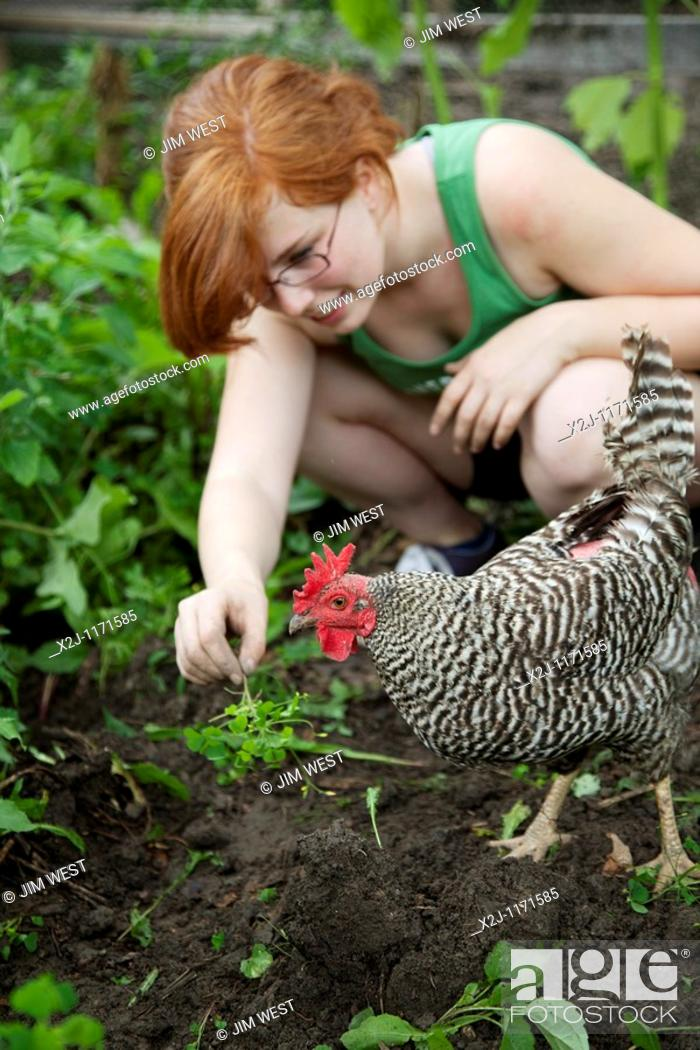 Stock Photo: Detroit, Michigan - A high school student plays with a rooster in a community garden  She is a volunteer working in the Summer in the City program.
