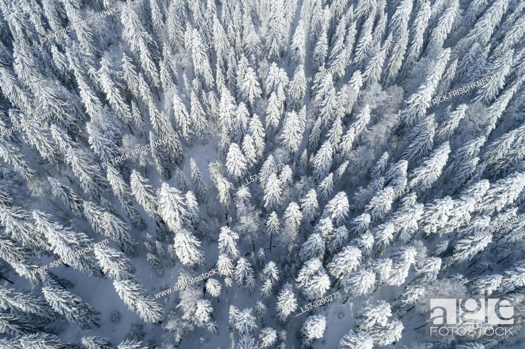 Stock Photo: firtree forest covered in snow, Switzerland.
