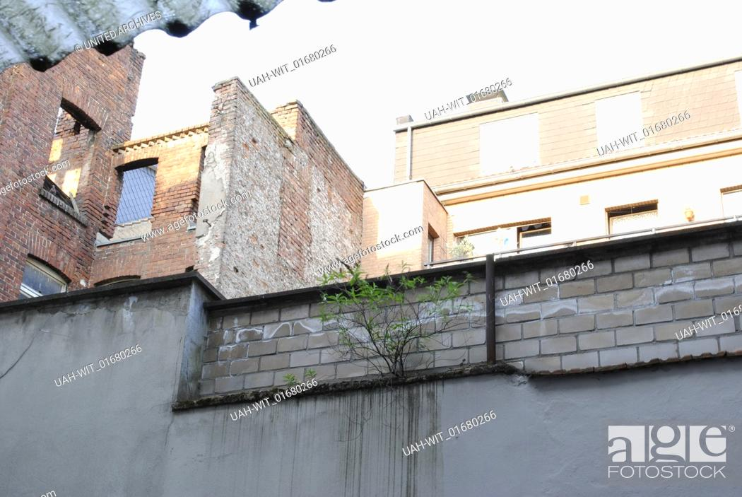 Blick Auf Einen Kleinen Grunen Strauch Auf Den Mauern In
