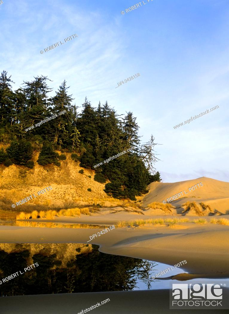 Stock Photo: Islands of trees are found in the dunes; Lakeside, Oregon, United States of America.