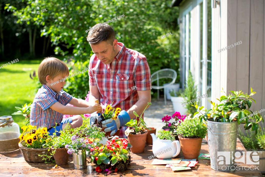 Stock Photo: MODEL RELEASED. Father and son potting up plants in garden.