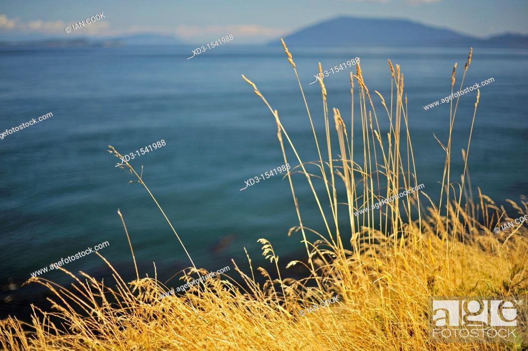 Stock Photo: Idaho fescue (Festuca idahoensis) grass, East Point, Saturna Island, British Columbia, Canada.