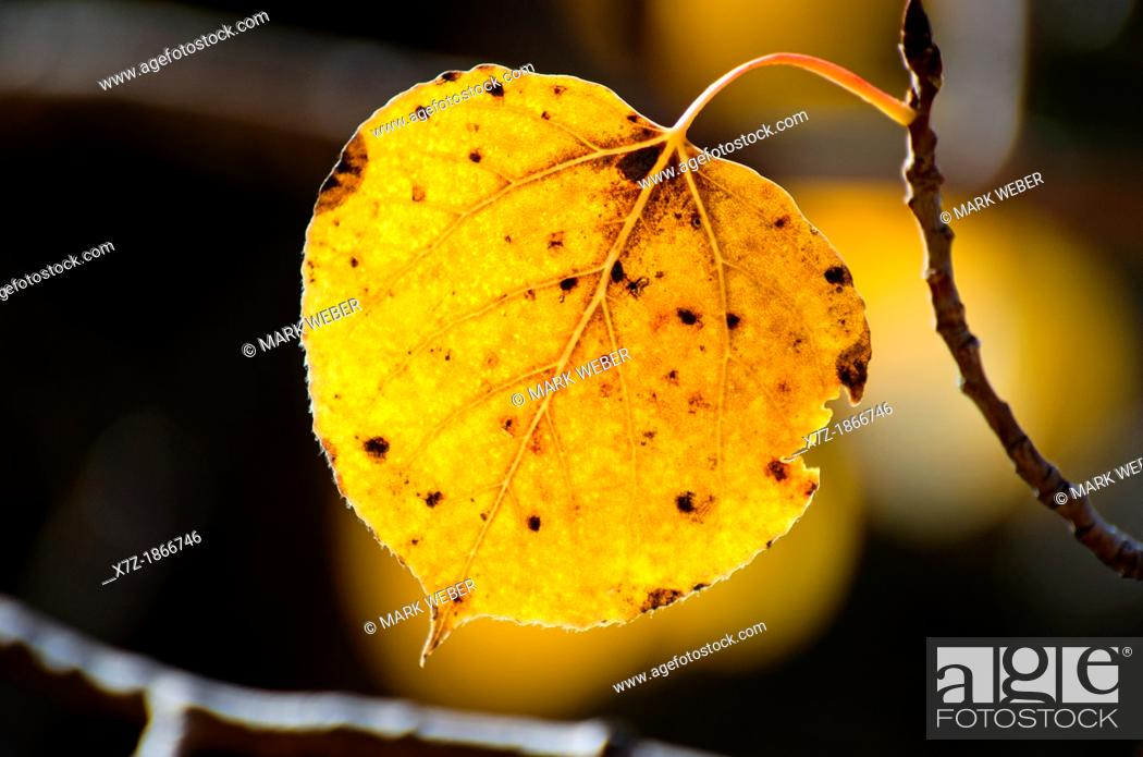 Stock Photo: Aspens leaf and Fall colors on Blacktail Butte in Grand Teton National Park in northern Wyoming.