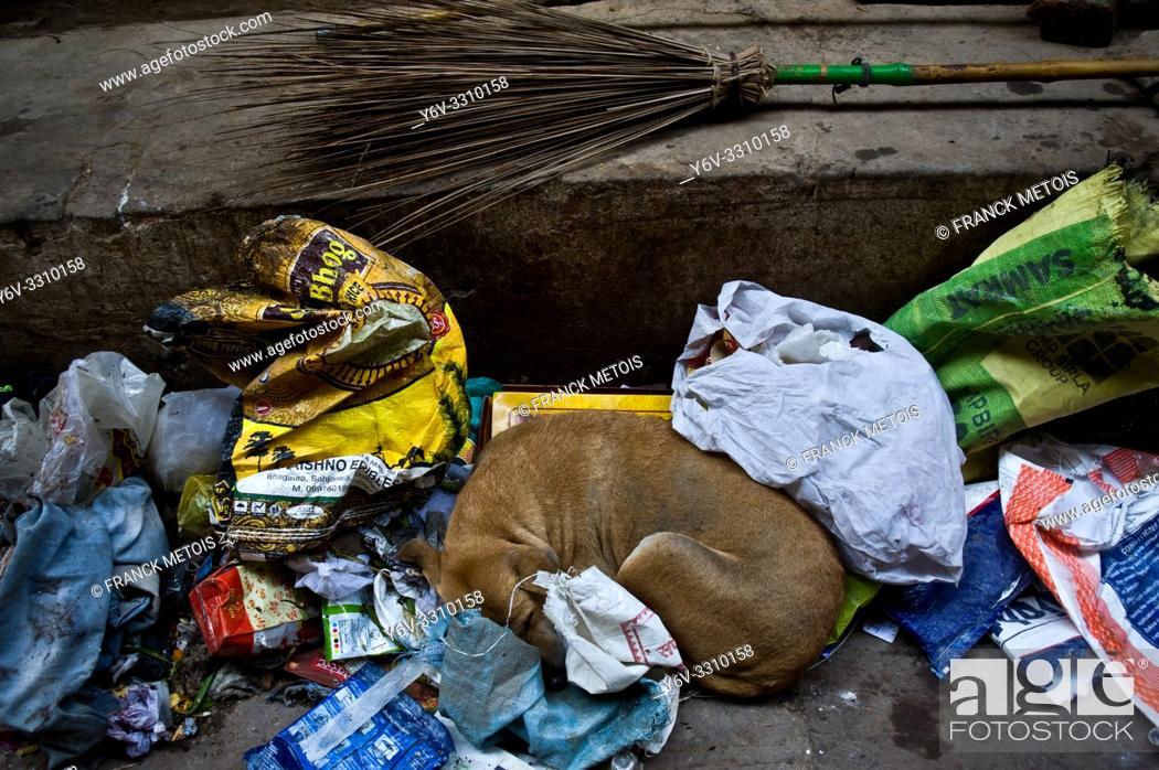 Stock Photo: Stray dog sleeping on a waste dump ( Varanasi, India).