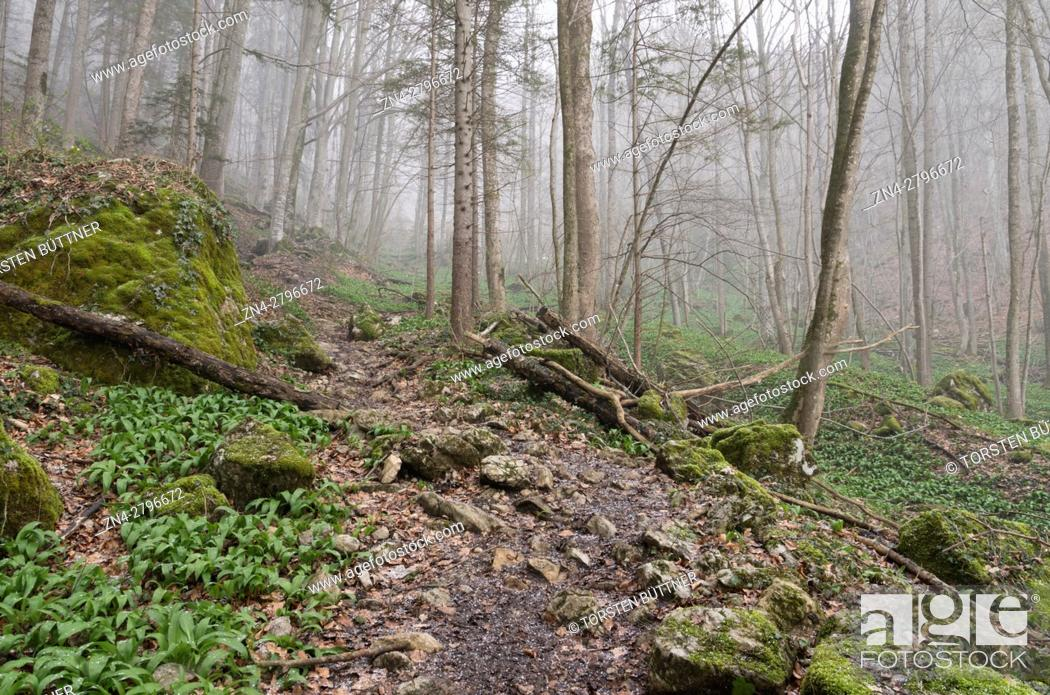 Stock Photo: Hiking Trail in the Dürres Eck Mountain region nearby the Limestone Alps National Park, Austria.