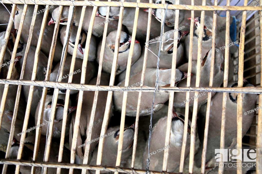 Stock Photo: birdmarket in kabul, afghanistan.
