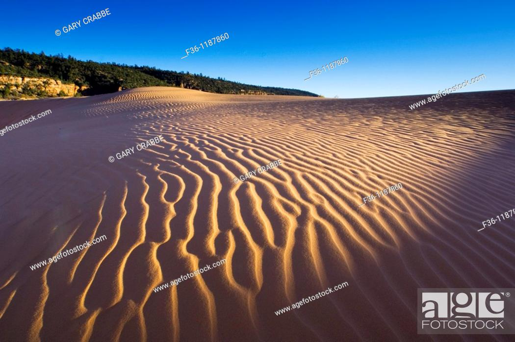 Stock Photo: Wind patterns in sand at sunset, Coral Pink Sand Dunes State Park, near Kanab, Kane County, Southern Utah.