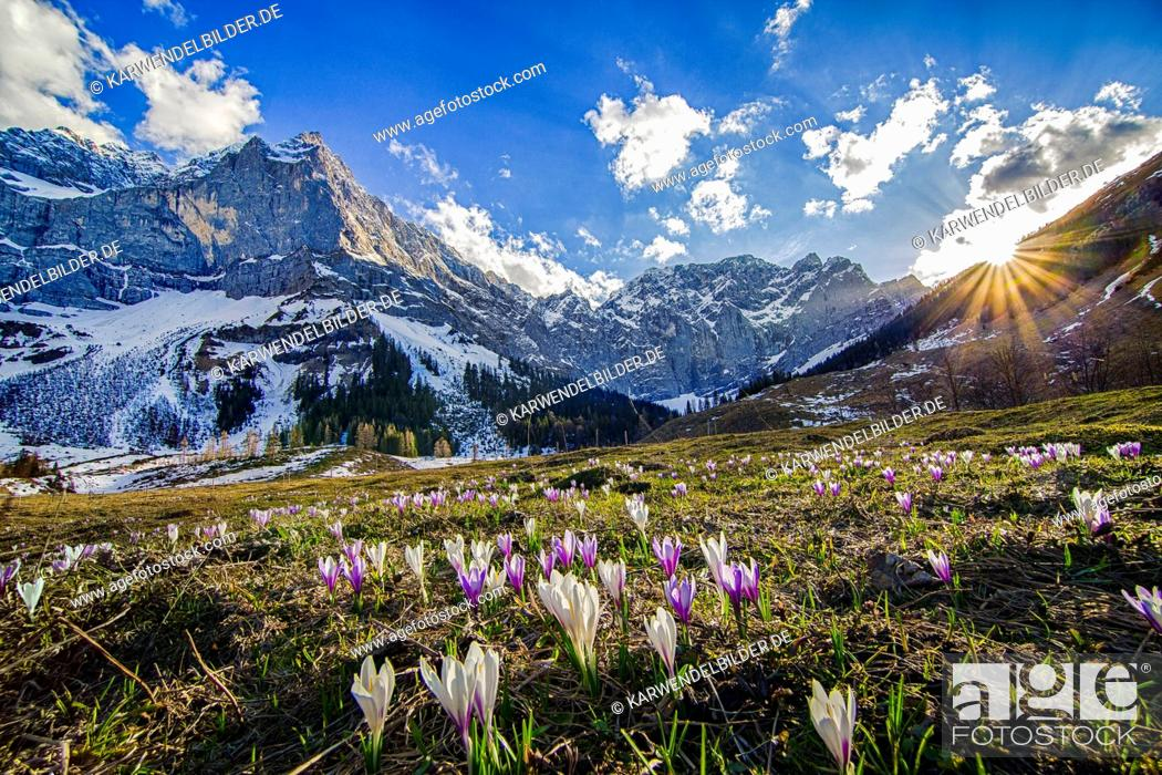 Stock Photo: Crocus meadow at sunset in the Eng (region).