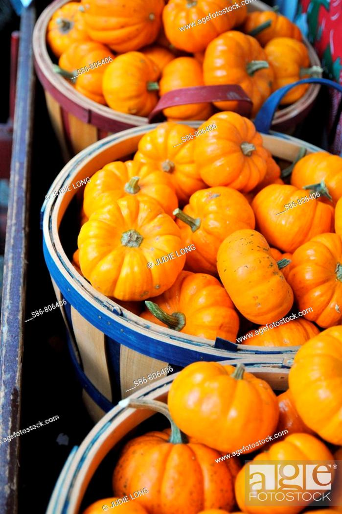 Stock Photo: White Mini Pumpkins displayed at an outdoor market.