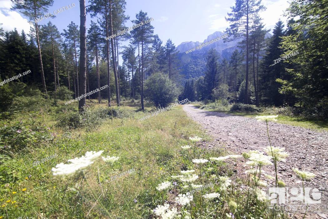 Imagen: Mountain landscape Selva de Oza Aragon Spain.