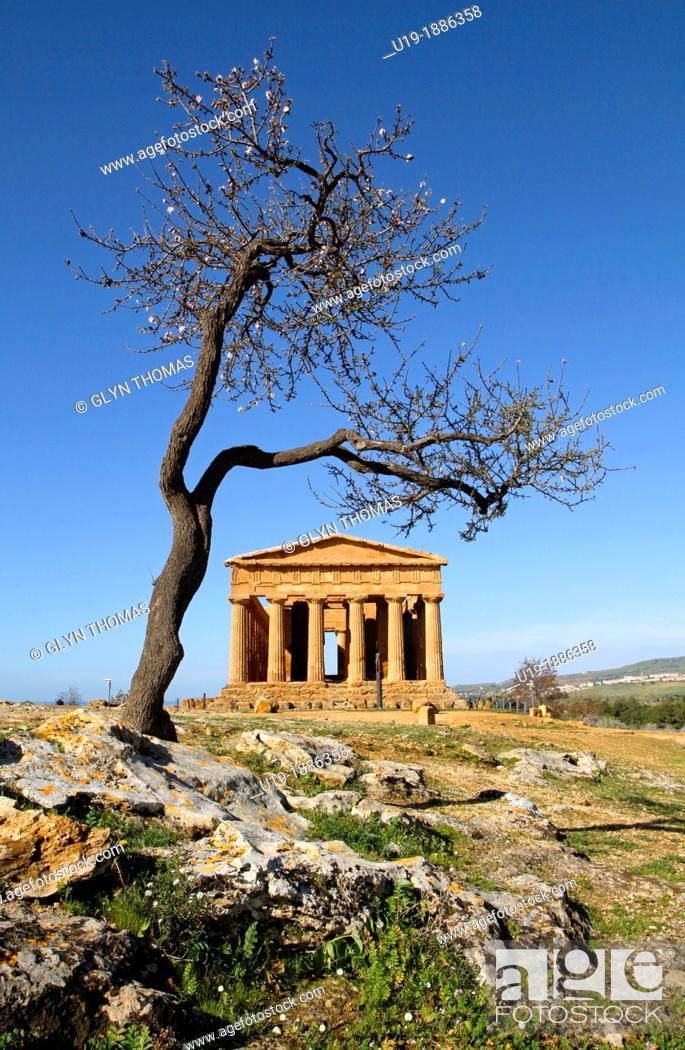 Stock Photo: Temple of Concordia with an Almond tree in the foreground, Valley of the Temples, Agrigento, Sicily, Italy.
