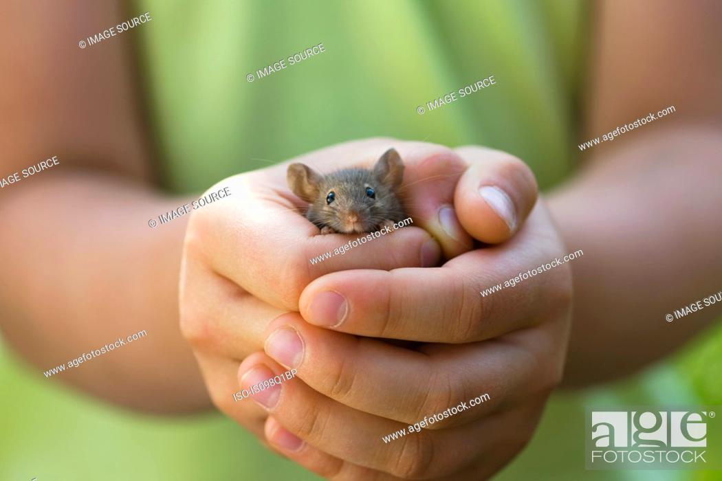 Stock Photo: A girl holding a mouse.