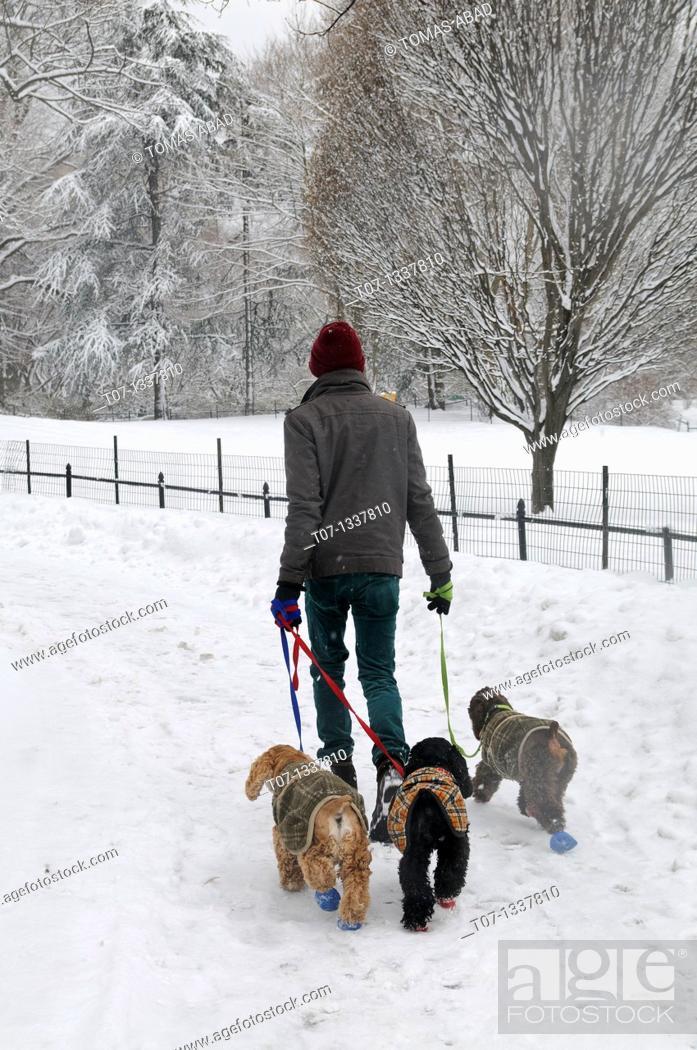 Stock Photo: Central Park, Manhattan, Snow Storm, January 25, 2011, New York City.