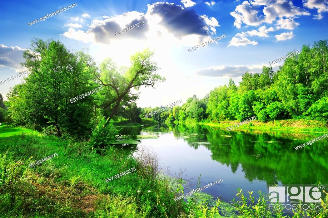 Stock Photo: Green forest on river at sunny summer day.