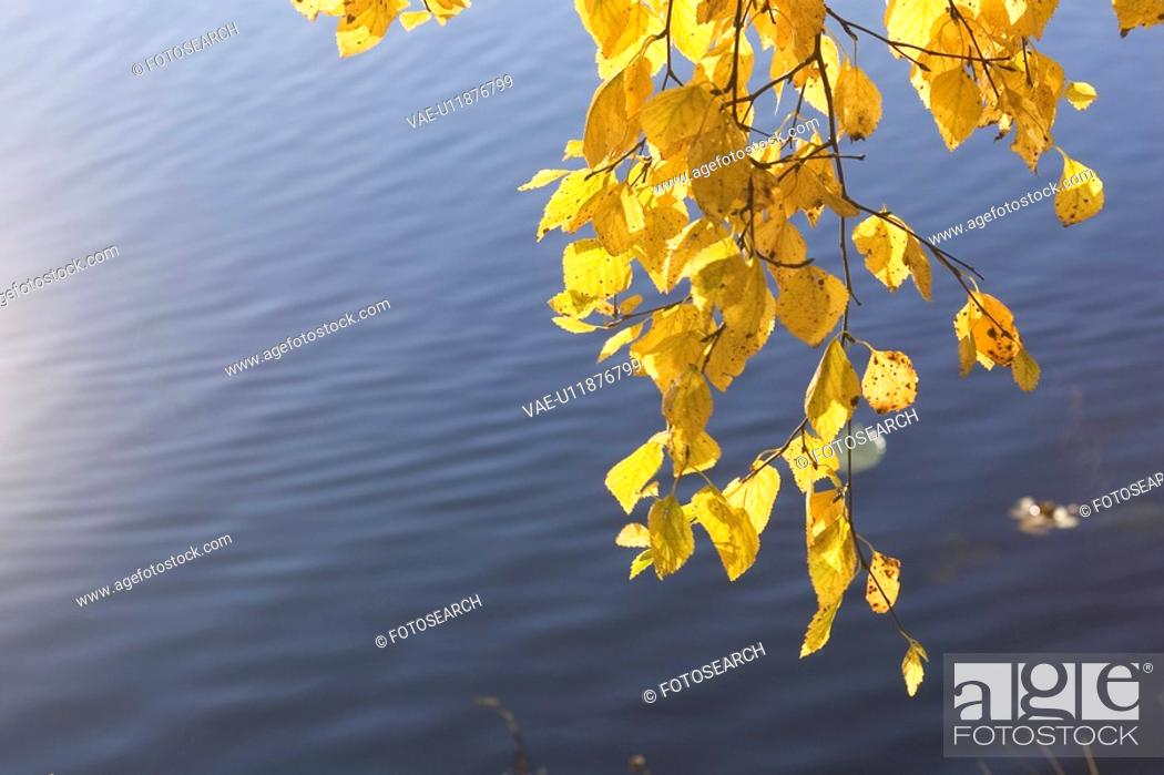 Stock Photo: Blue, Close-Up, Clear Sky, Branch, Autumn.