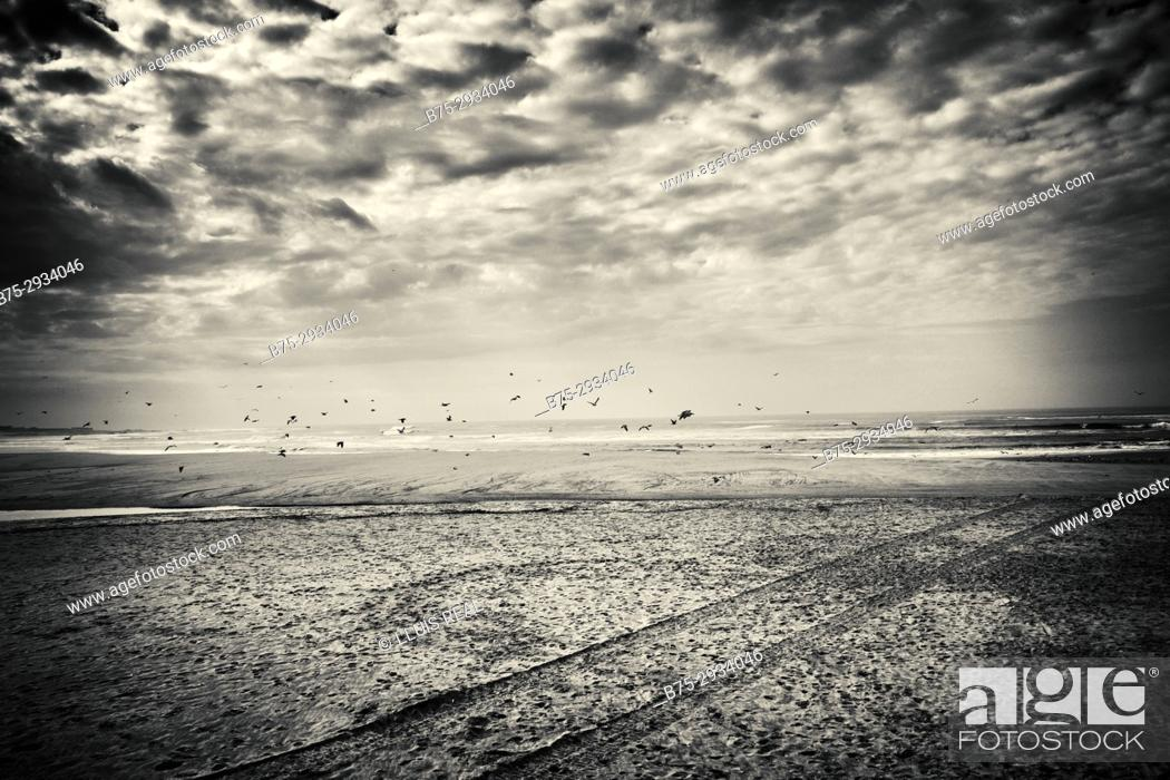 Stock Photo: View of the beach with flying birds and clouds. Praia de Vila, Praia de Ancora, Viana do Castelo, Portugal.