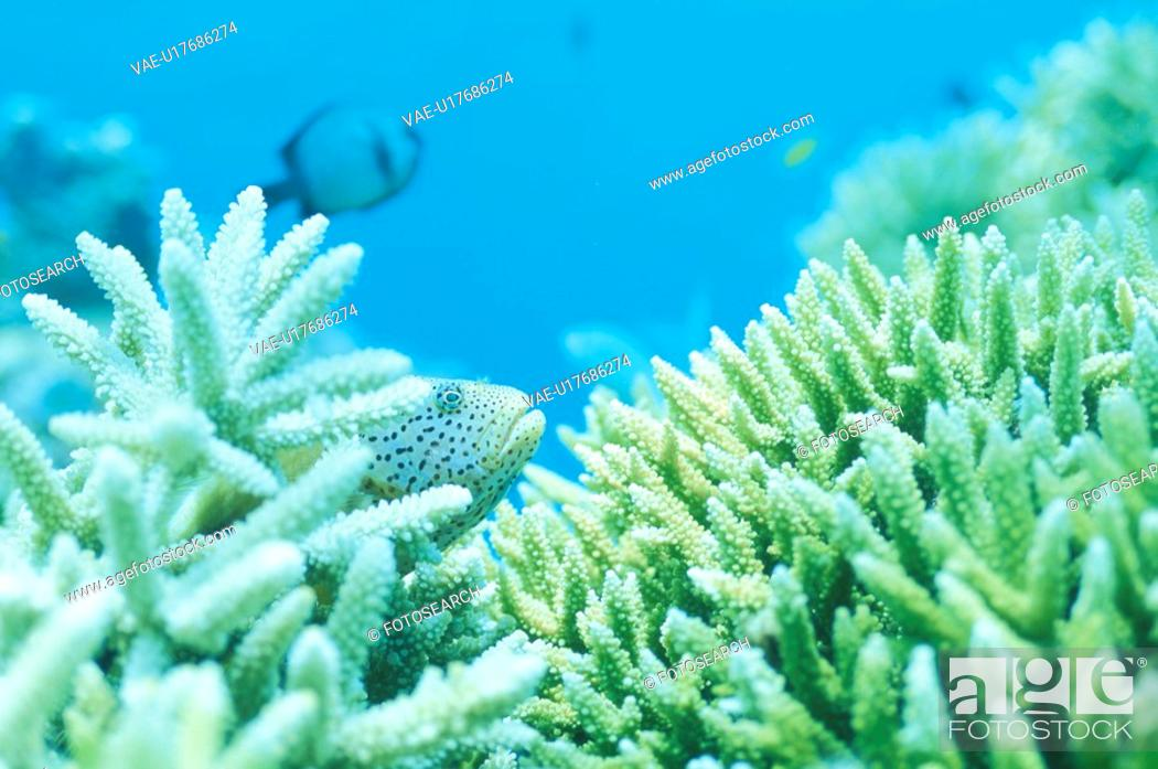 Stock Photo: Coral And Fish.