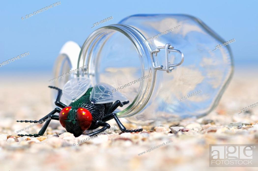 Stock Photo: insect in front a open jar.