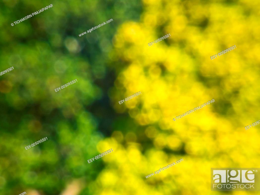 Stock Photo: small green and yellow boke.