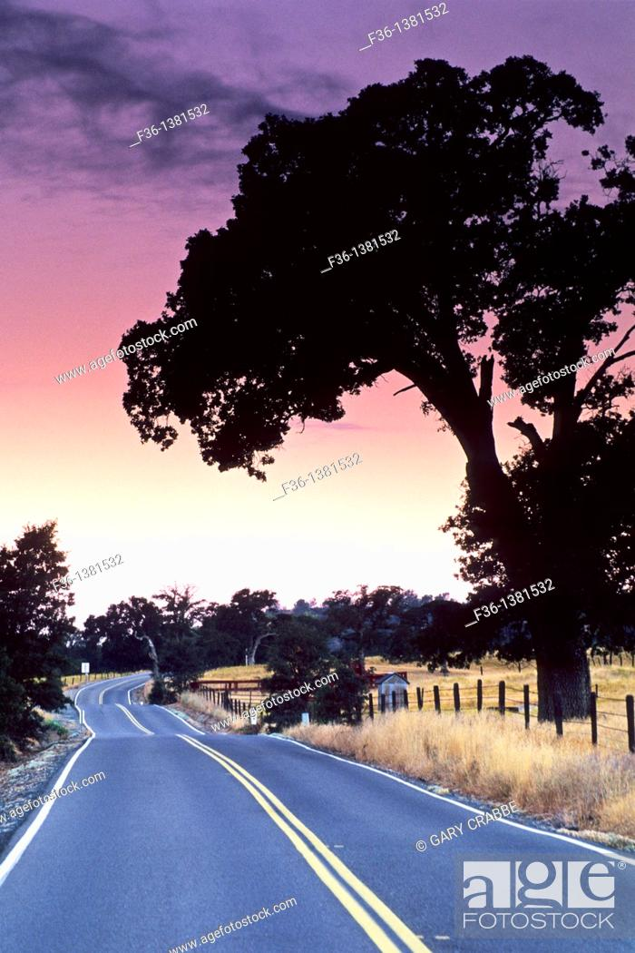 Stock Photo: Morning light over country road near Plymouth, Shenandoah Valley, Amador County, California.