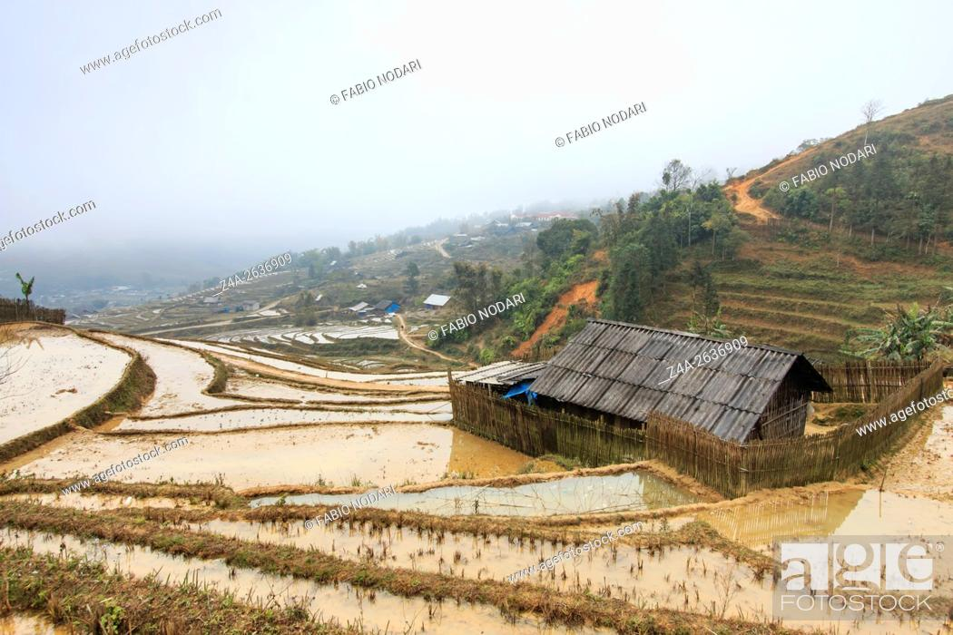 Stock Photo: Isolated house among the rice terraces of Sapa in north Vietnam.