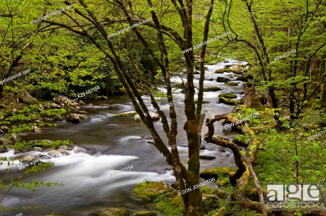 Stock Photo: Spring foliage overhanging rapids in Middle Prong of Little River. Great Smoky Mountains National Park, Tennessee, Appalachian, USA.