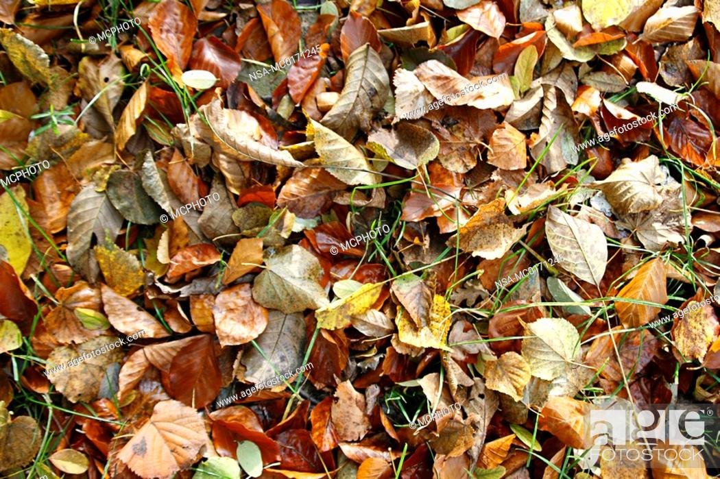 Stock Photo: Autumncolours.