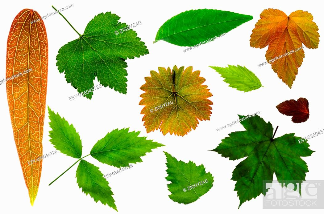 Stock Photo: Collection of garden leaves on a white background.