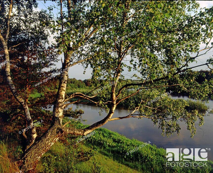 Stock Photo: Spring on Bug river. Podlasie region. Eastern Poland.