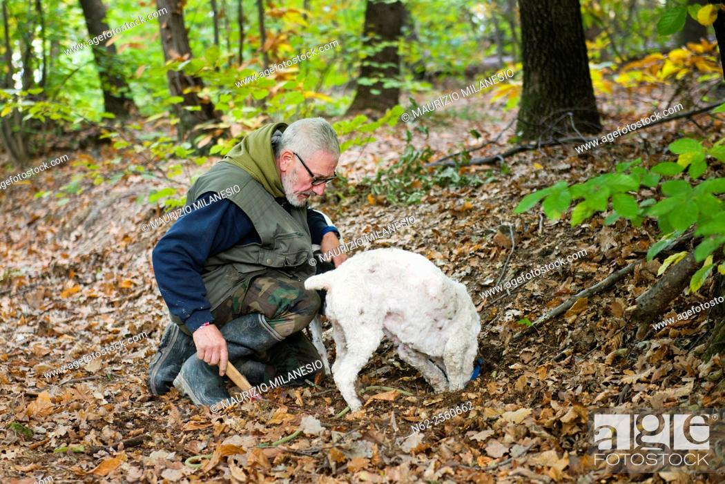 Stock Photo: Senior man looking truffles in the woods with his dog.