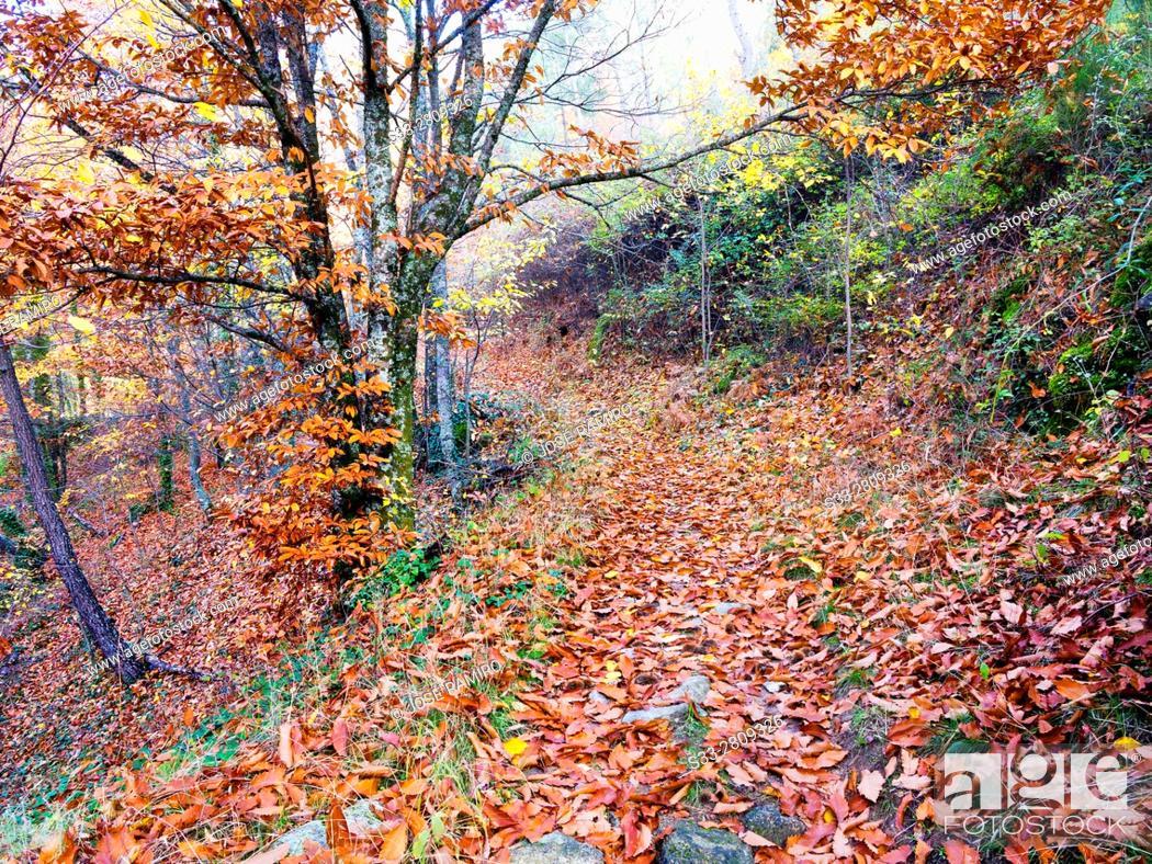 Stock Photo: Path to Casillas in the Sierra de Gredos. Avila. Castilla Leon. Spain. Europe.