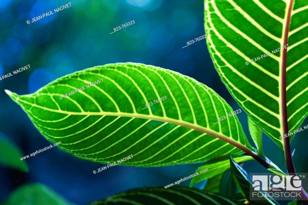 Imagen: Nature.