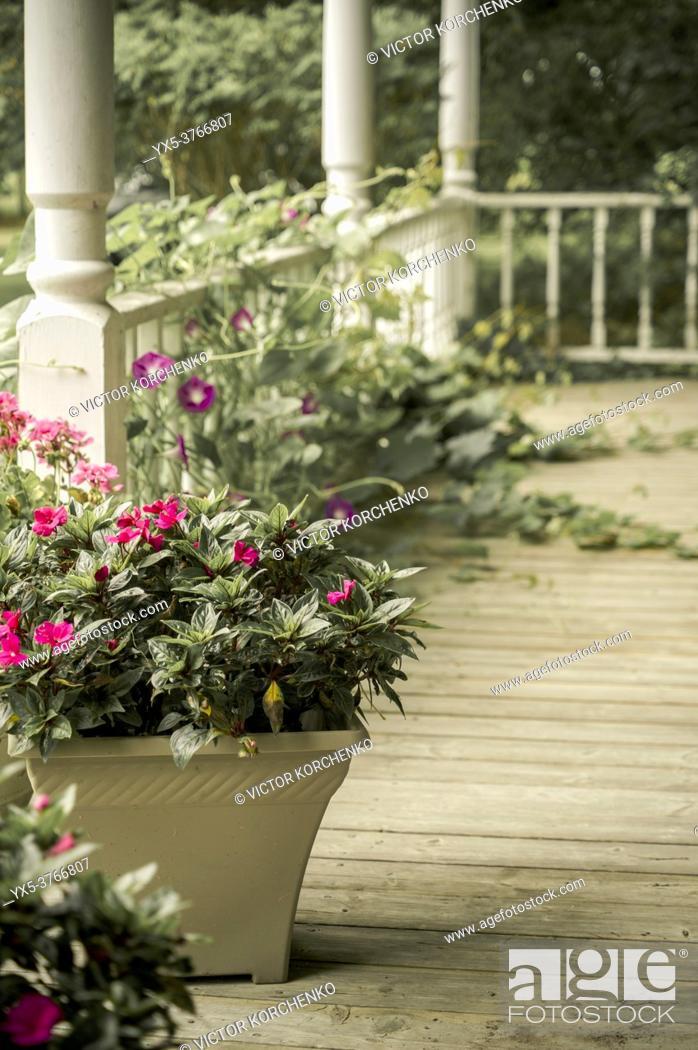 Imagen: Overgrown plants on a porch.