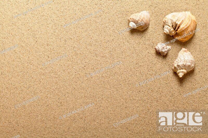 Stock Photo: Shells On Sand.