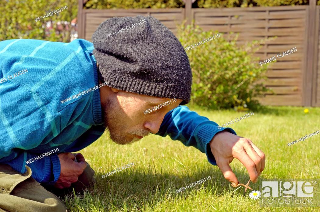 Imagen: Man cutting daisy with miniatur scissors.