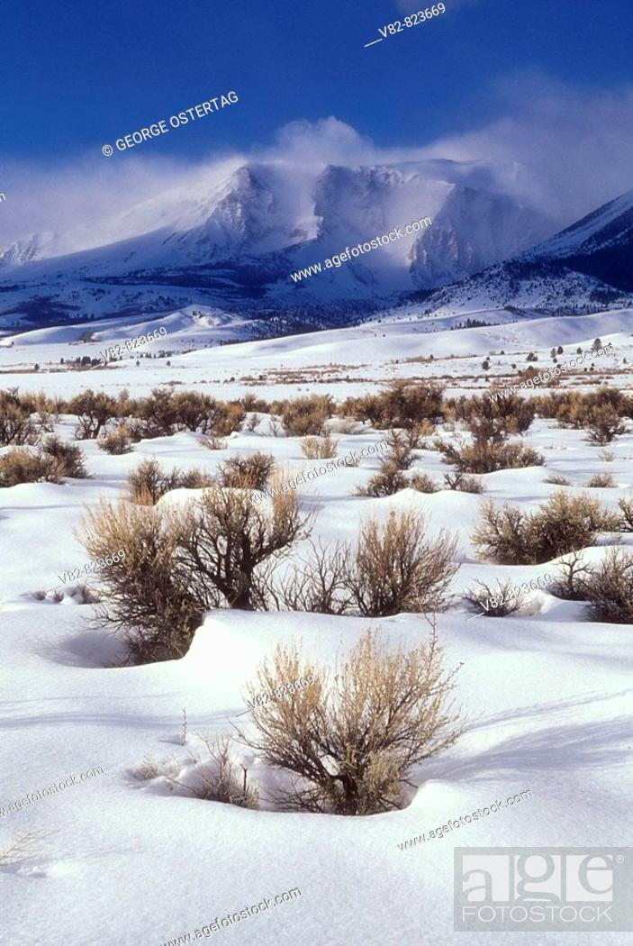 Stock Photo: CA540S Parker Peak from CA 158, Inyo National Forest, CA.