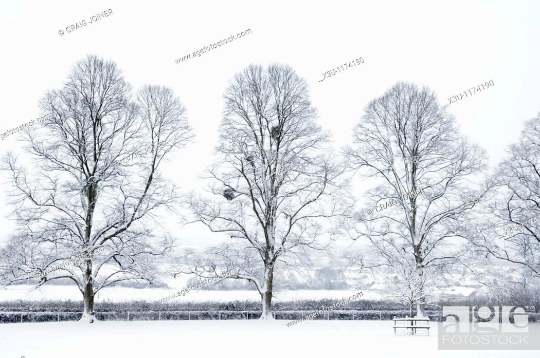 Stock Photo: Trees in the countryside after overnight snow  Wrington, Somerset, England, United Kingdom.