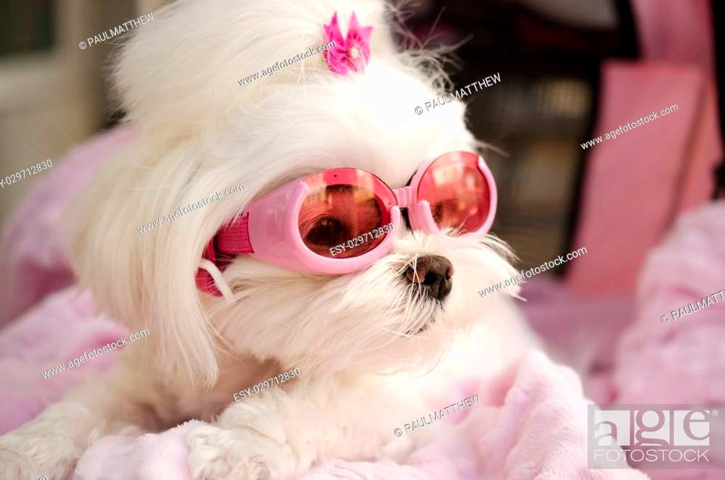 Funny Pet Dog Wearing Goggle Sun Glasses Stock Photo Picture And Low Budget Royalty Free Image Pic Esy 029712830 Agefotostock,Hacks Space Saving Ideas For Small Apartments
