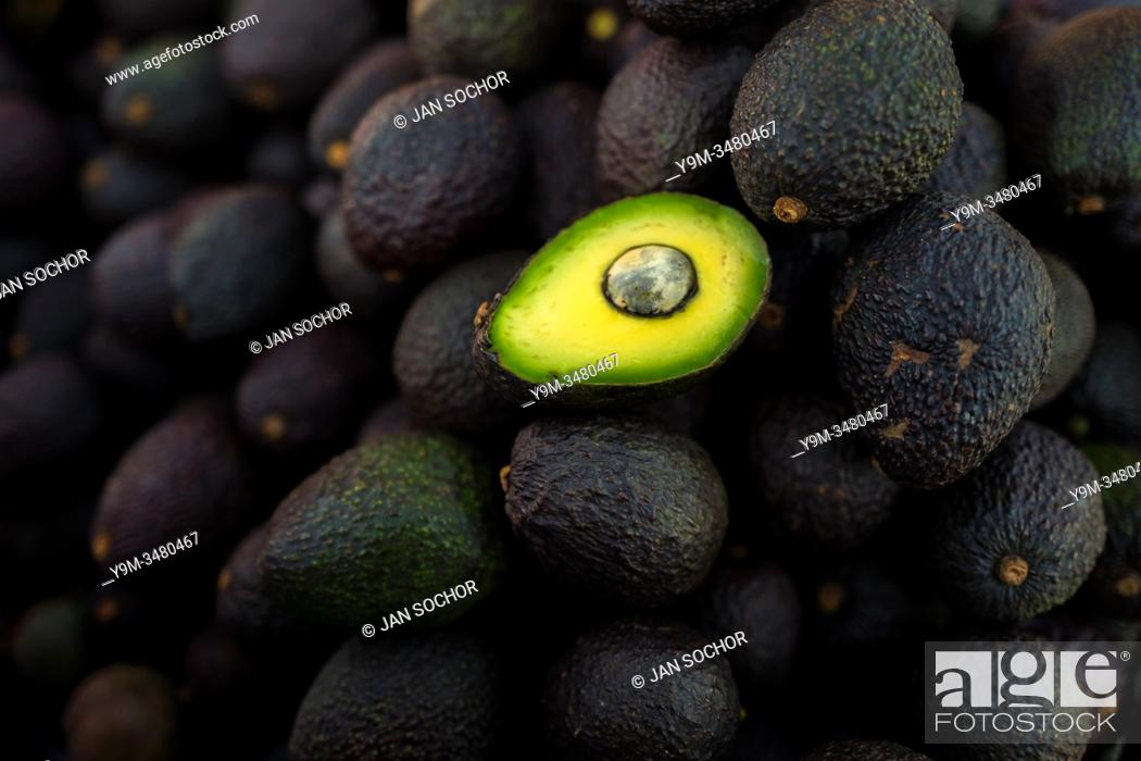 Stock Photo: Ripe, black-purplish Hass avocados are seen offered for sale in the street of Medellín, Antioquia department, Colombia, 28 November 2019.