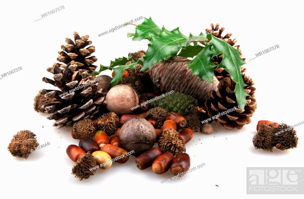 Stock Photo: set of autumn nature elements.