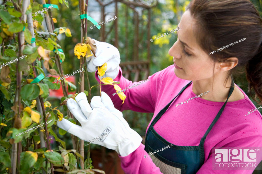 Stock Photo: Gardener. Garden, Tree nursery. Gipuzkoa, Euskadi. Spain.