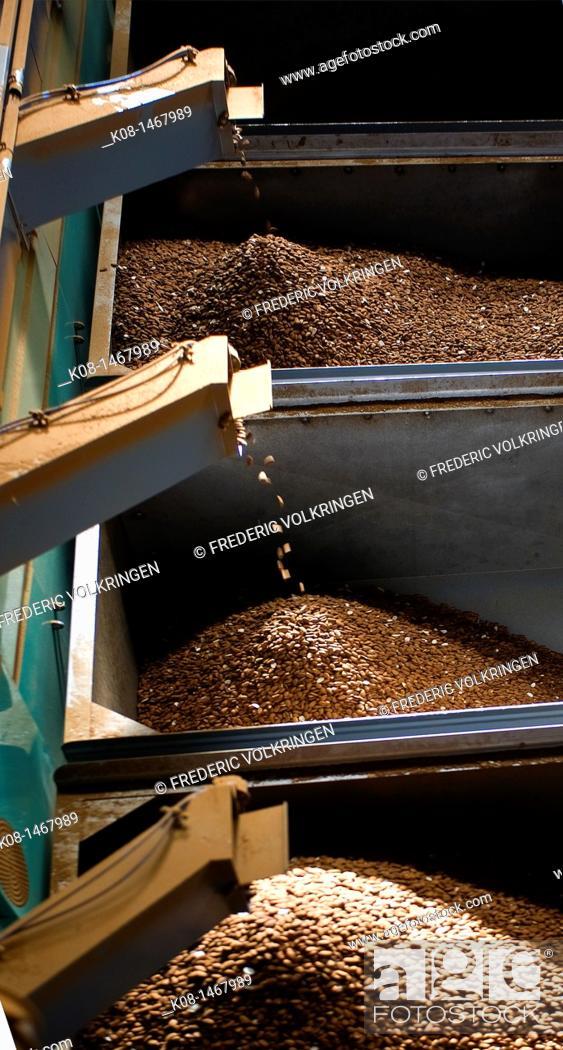 Stock Photo: Almonds processing, Spain.