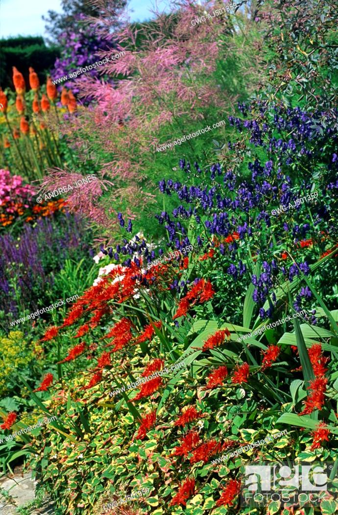 Large flowering summer perennial bed stock photo picture and stock photo large flowering summer perennial bed mightylinksfo