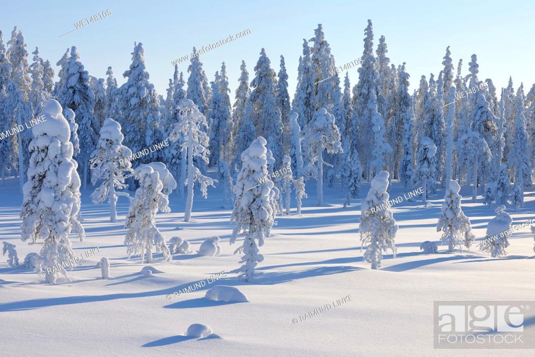 Stock Photo: Snow covered landscape in winter, Posio, Kuusamo, Nordoesterbotten, Pohjois Pohjanmaa, Finland, Suomi.