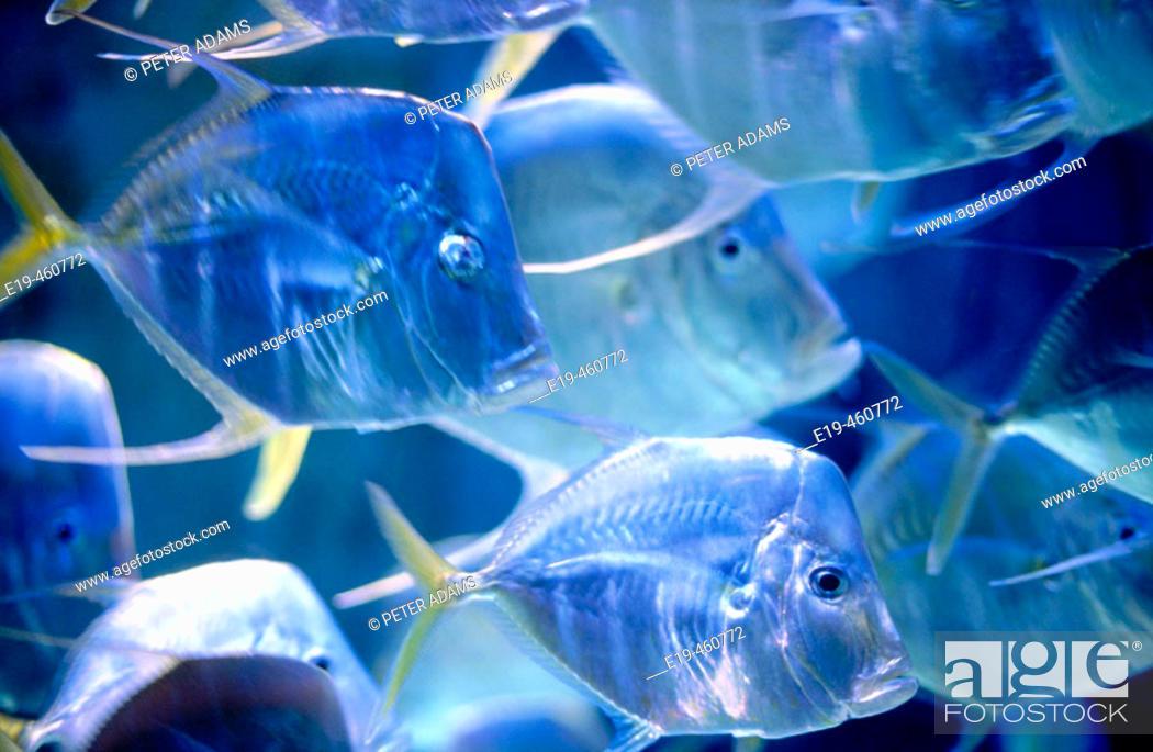 Stock Photo: Fish in aquarium. Bahamas.
