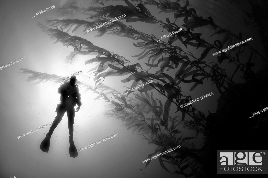 Stock Photo: Diver in sun with kelp.