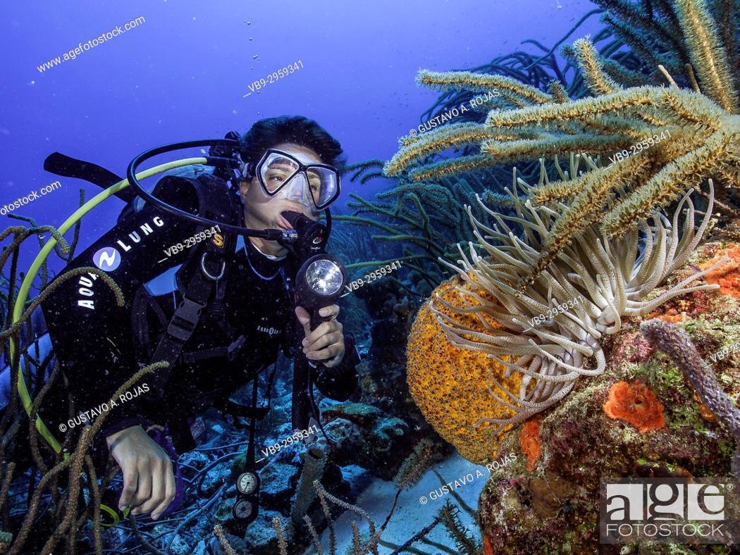 Stock Photo: Caribbean Sea Los Roques, woman Scuba-Diver Tour, Underwater, Venezuela, Sponge.