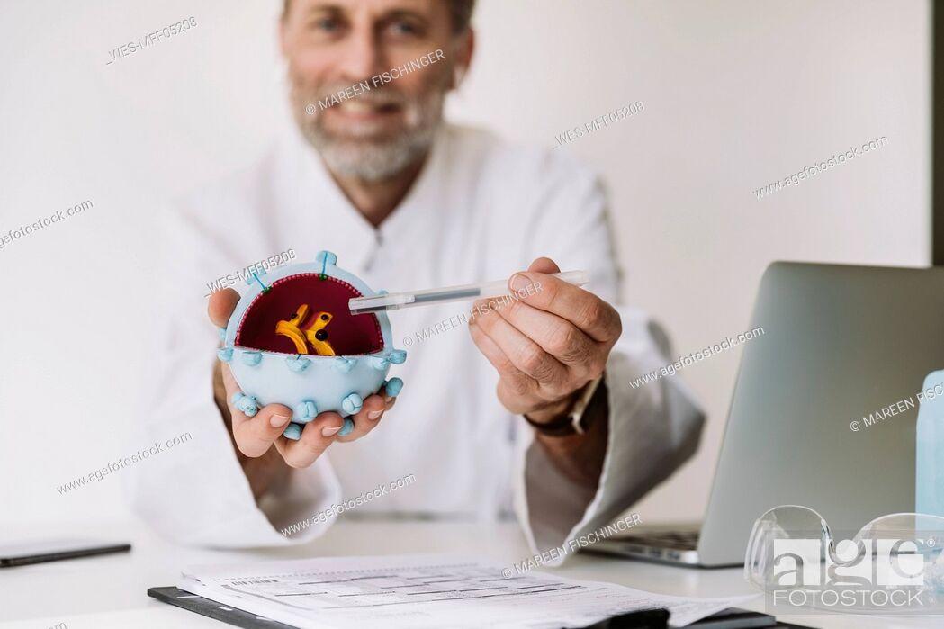 Stock Photo: Scientist holding corona virus model at desk.