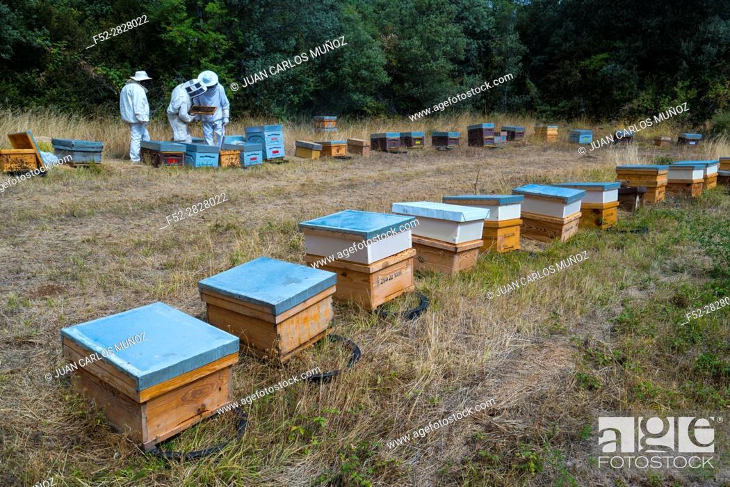 Stock Photo: Pedro Arto Beekeeper, Aragües del Puerto Village, Jacetania, Huesca, Aragon, Spain, Europe.