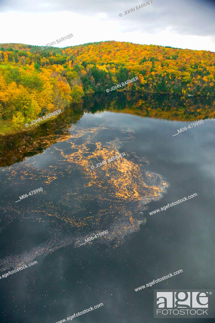 Stock Photo: Tens of thousands of Autumn leaves moves down the Connecticut River in Western Massachusetts. Taken from the French King Bridge near Turners Falls.